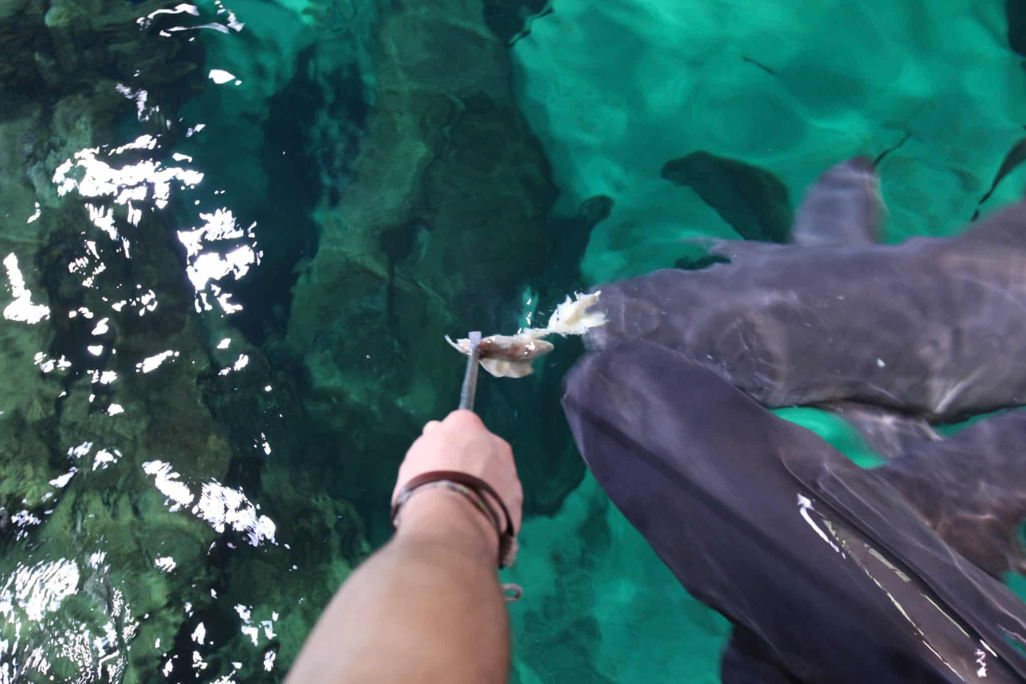 Nourrissage des requins - Aquarium de Paris