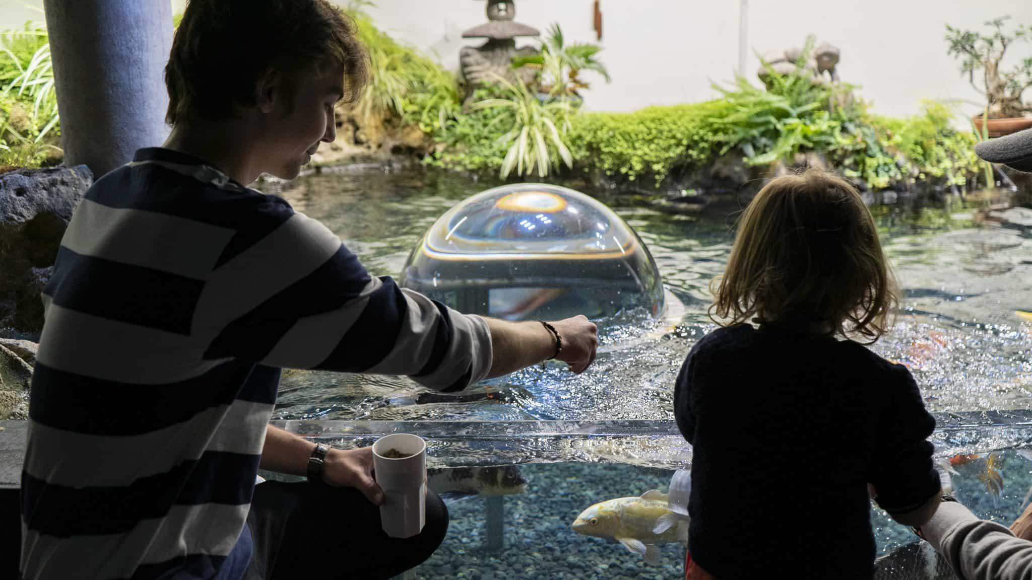 Nourrissage au bassin caresses - Aquarium de Paris