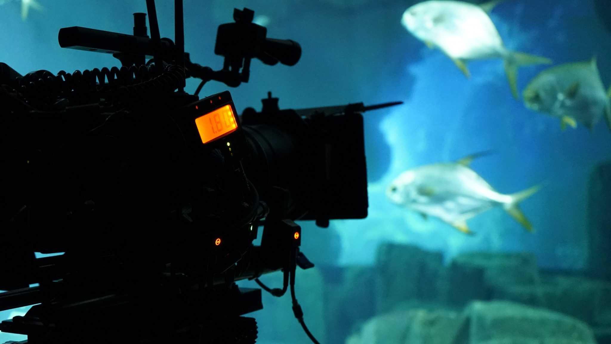 Tournage camera Lounge - Aquarium de Paris