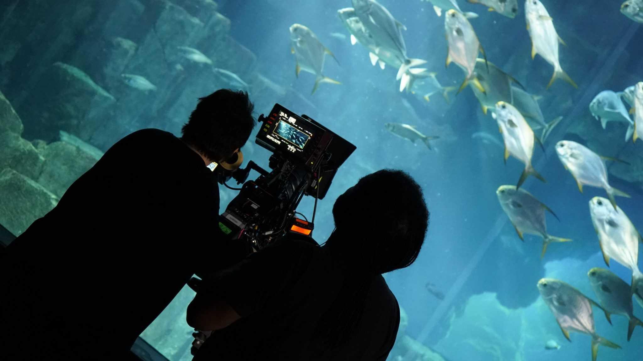 Tournage camera- Lounge - Aquarium de Paris