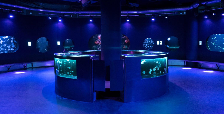 Médusarium - Aquarium de Paris