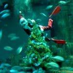 Père Noël plongeur - Aquarium de Paris
