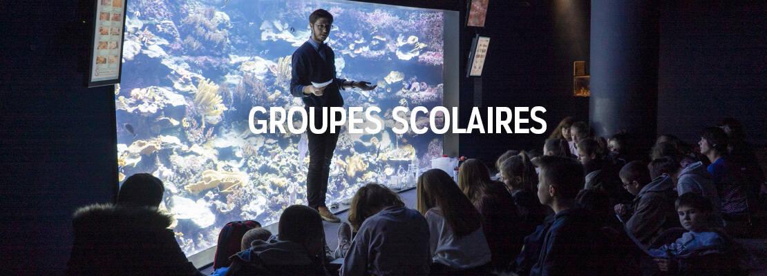 Groupes scolaires - Aquarium de Paris - Sortie scolaire originale