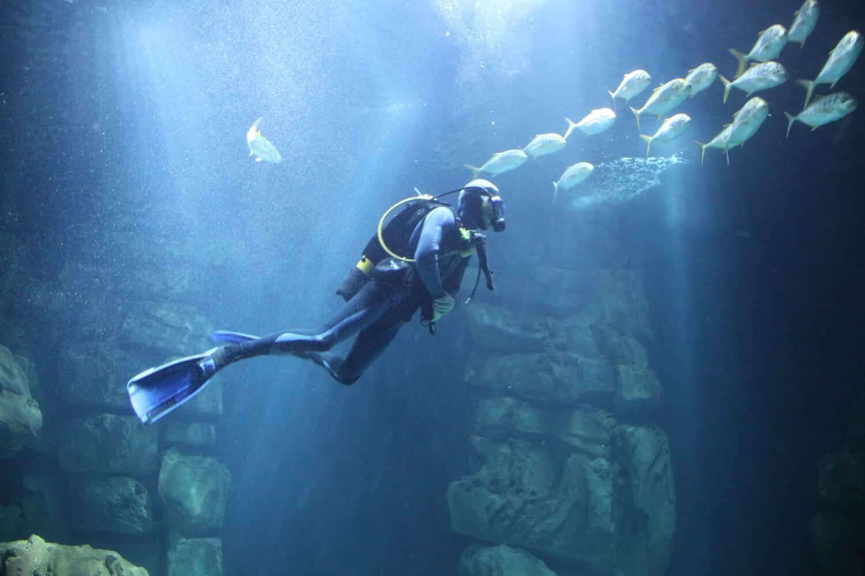 Rencontre avec un plongeur - Aquarium de Paris