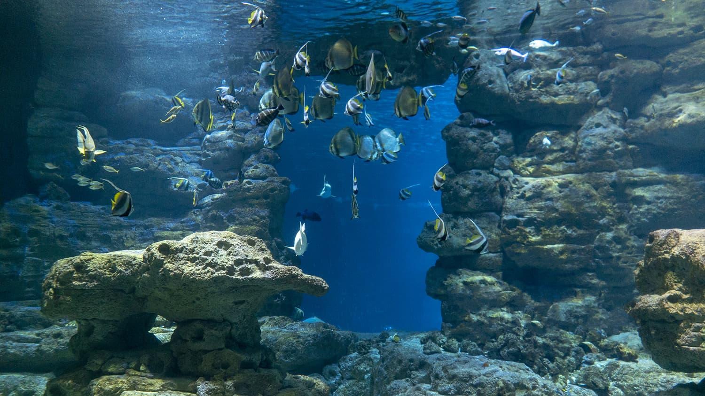 bassin-nouvelle-caledonie-bt02-ensemble-large-poissons