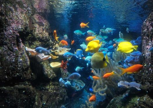 exposition-aquarium-de-paris